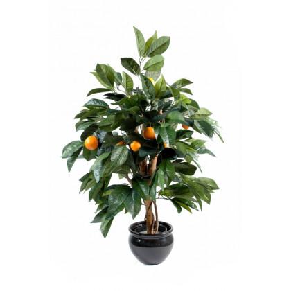 Oranger semi-naturel