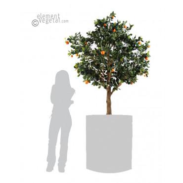 Oranger semi-naturel Ht 210 cm