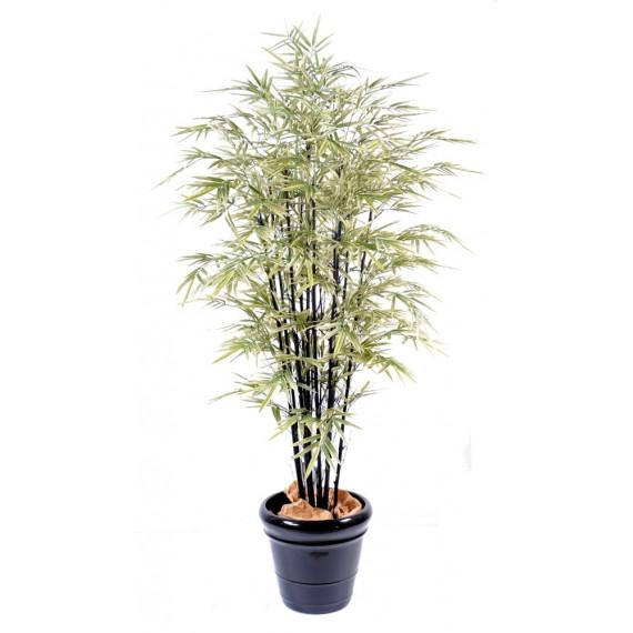 Bambou Noir Large Semi-Naturel