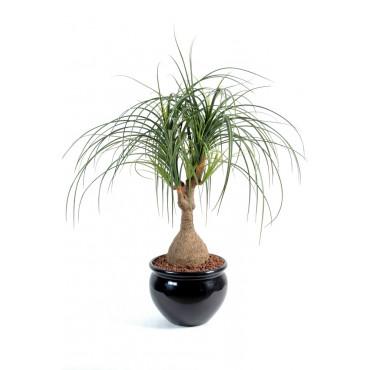 Beaucarnea Artificiel - Ht 75 cm