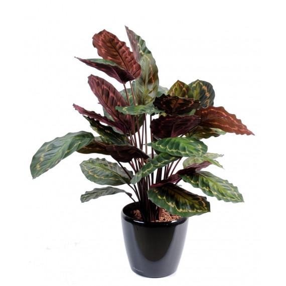 Calathea Roseopicta Artificiel