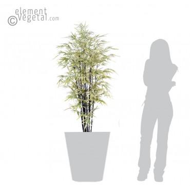 Bambou Noir Shiroshima Large Semi-Naturel - Ht 160 cm