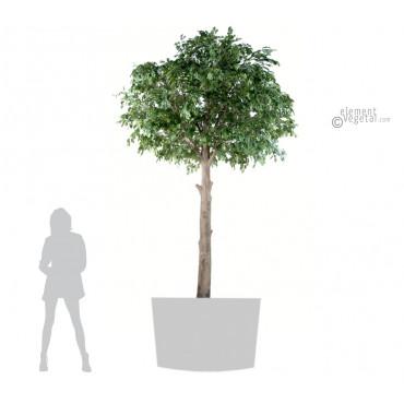Chêne Géant Artificiel - Ht 300 cm