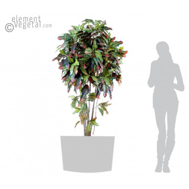 Croton Semi-Naturel - Ht 180 cm