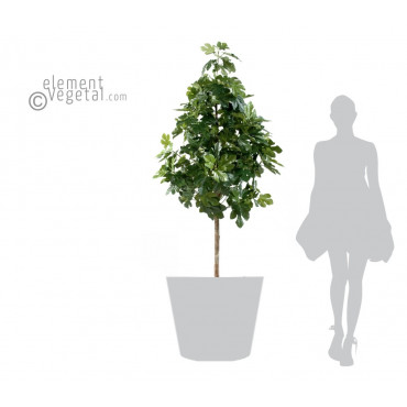 Figuier Semi-Naturel - Ht 170 cm