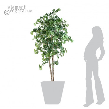 Arbre Ginkgo Biloba Semi-Naturel - Ht 180 cm