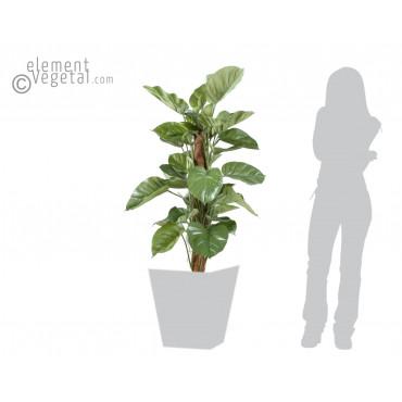 Pothos Semi-Naturel - Ht 150 cm