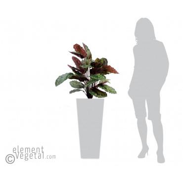Calathea Roseopicta Artificiel - Ht 70 cm