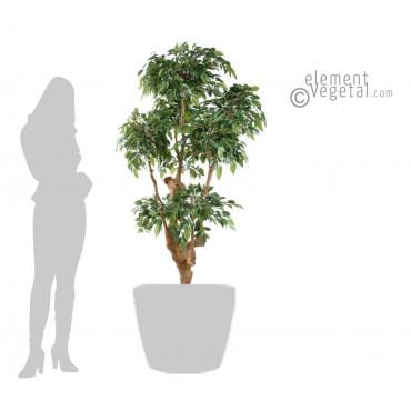 Ficus Natasja Semi-Naturel - Ht 170 cm