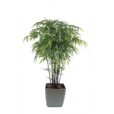 Bambou Noir Semi-Naturel En Pot Carré - Ht 180 cm