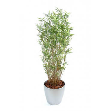 Bambou Oriental Multiple Semi-Naturel En Pot Rond - Ht 150 cm
