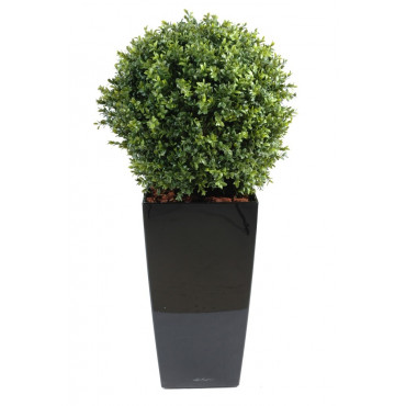 Boule Buis Semi-Naturelle En Pot Kubis - Diam 50 cm