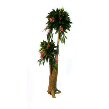 Arbre Bonsaï Cocculus Stabilisé 160cm