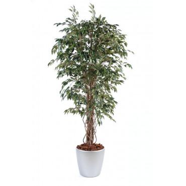 Ficus Lianes Petites Feuilles Semi-Naturel En Pot Rond - Ht 190 cm