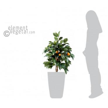 Oranger semi-naturel - Ht 80 cm