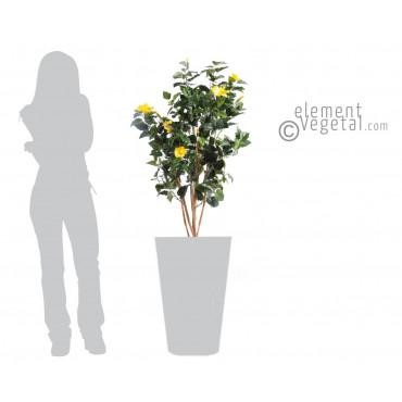 Hibiscus Jaune Semi-Naturel - Ht 110 cm