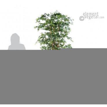 Aralia Erable Vert Semi-Naturel - Ht 180 cm