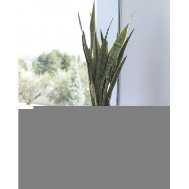 Sanseveria Vert/Jaune Artificiel - En Contexte