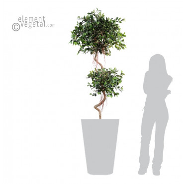 Ficus Spirale Artificiel - Ht 175 cm