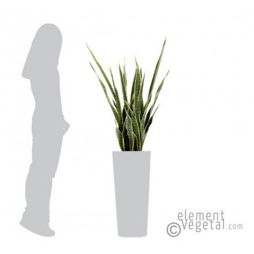 Sanseveria Vert/Jaune Artificiel - Ht 110 cm