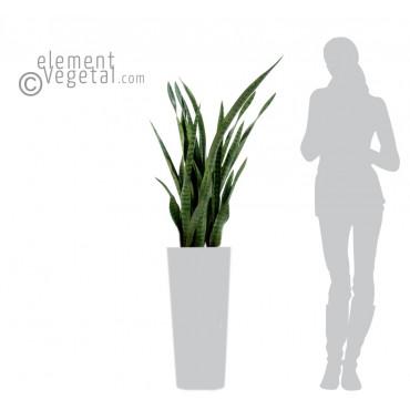 Sanseveria Vert Artificiel - Ht 110 cm