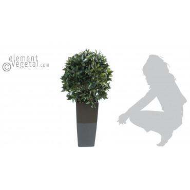 Boule de Laurier Semi-Naturelle En Pot Kubis - Ht 120 cm x Diam 60 cm