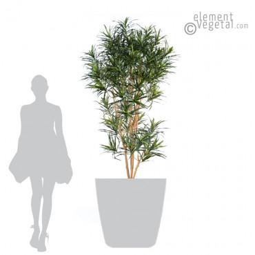 Grand Dracena Anita Semi-Naturel - Ht 180 cm