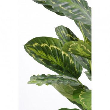 Maranta Calathea Makoyana Artificiel - Ht 56 cm
