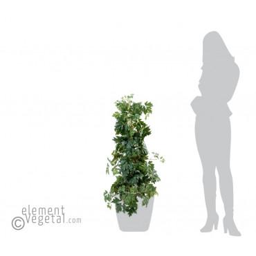 Cissus Semi-Naturel - Ht 100 cm