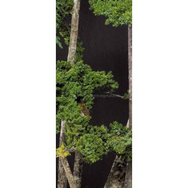 Arbre Bonsaï Juniperus Stabilisé Ht 160 cm - Zoom