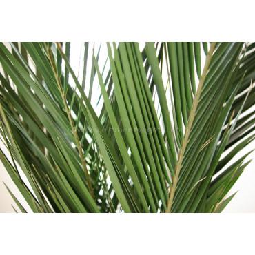 Palmier Phoenix Ananas Stabilisé - Zoom