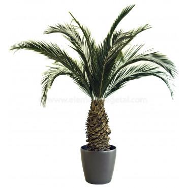 Palmier Phoenix Ananas Stabilisé