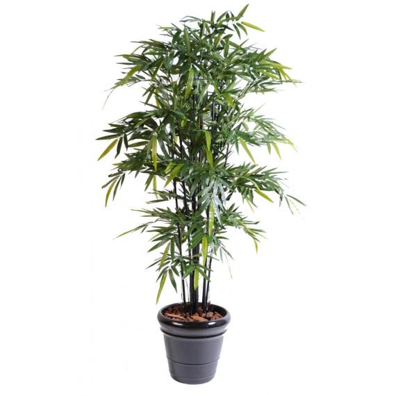 Bambou Noir Semi-Naturel