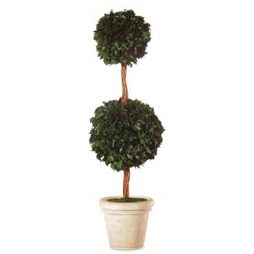 Topiaire Double Boule de Lierre Stabilisé Vert