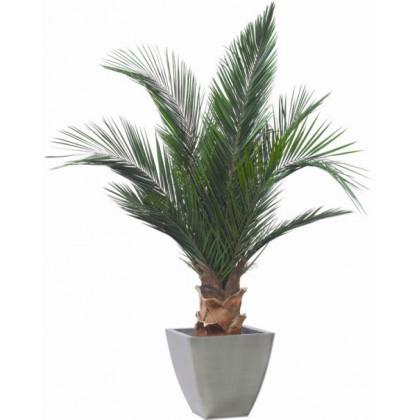 Plante Phoenix Stabilisé 150 cm