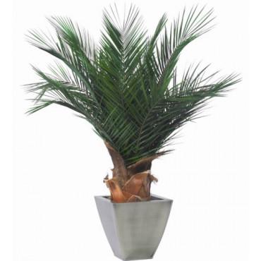 Plante Phoenix Stabilisé 100 cm