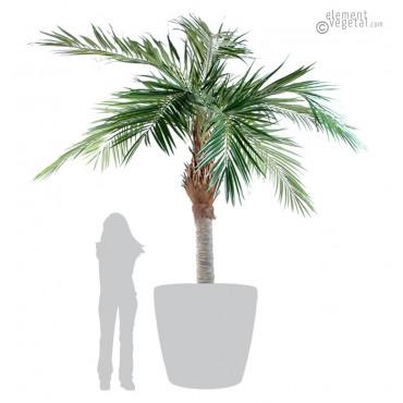 Palmier Majesty Artificiel 320 cm