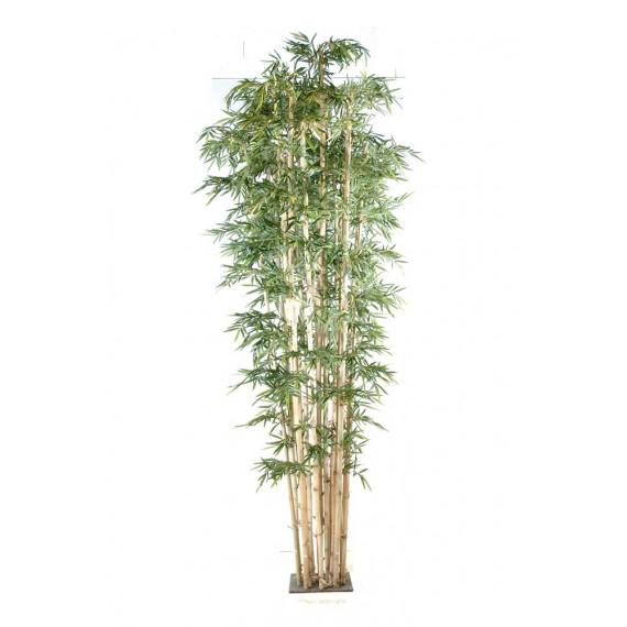 Bambou Géant Semi-Naturel