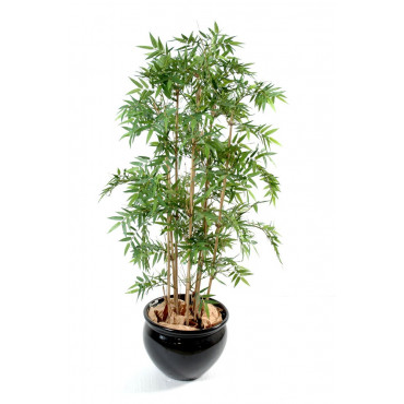 Bambou Oriental Semi-Naturel