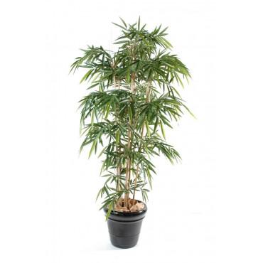 Bambou Semi-naturel
