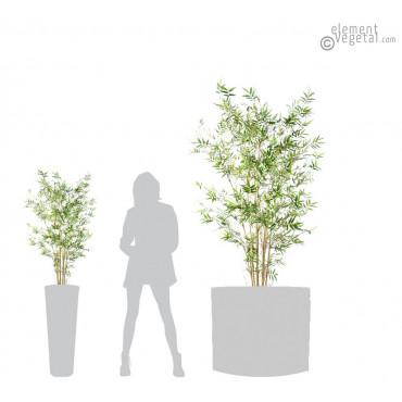 Bambou Oriental Petites Feuilles Semi-Naturel 120 cm + 220 cm