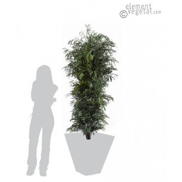 Eucalyptus Nicoly Stabilisé - Vert 180 cm