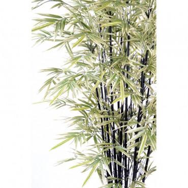 Bambou Noir Shiroshima Large Semi-Naturel - Zoom