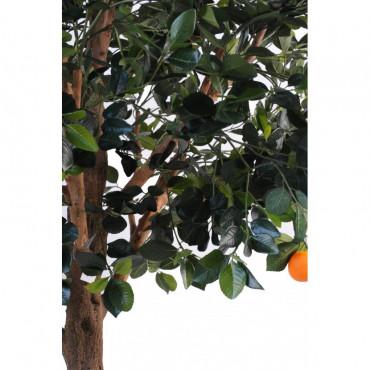 Grand Oranger Semi-Naturel