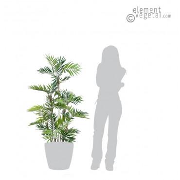 Palmier Parlor Semi-Naturel 150 cm