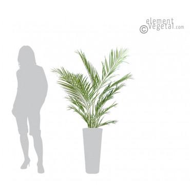 Palmier Kentia Artificiel 150 cm