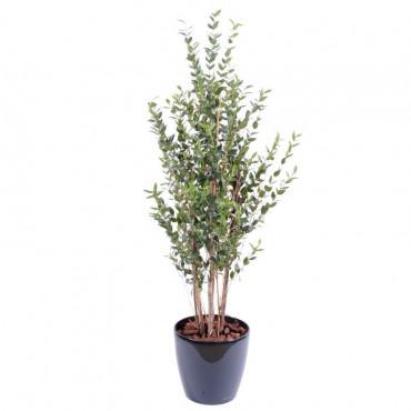 Eucalyptus Buisson Semi-Naturel