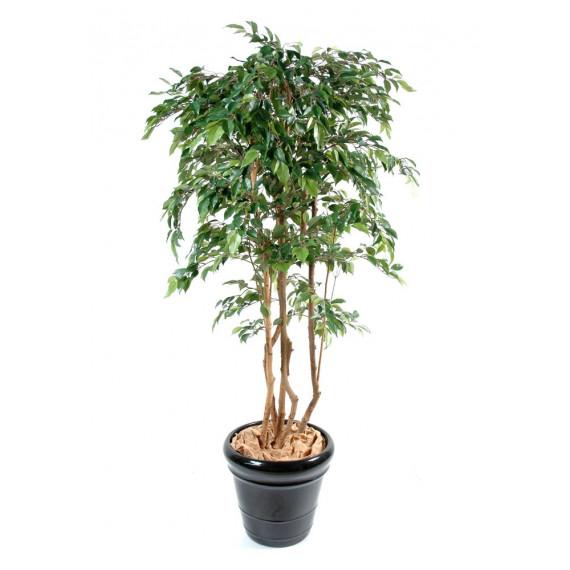 Ficus Troncs Multiples Natasja Semi-Naturel Vert