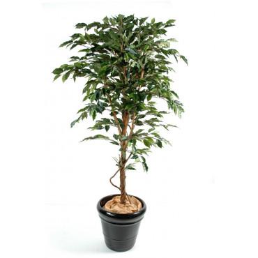 Ficus Tronc Simple Semi-Naturel Vert