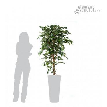 Ficus Tronc Simple Semi-Naturel Vert 180 cm